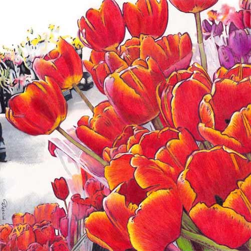 Bring Home Tulips