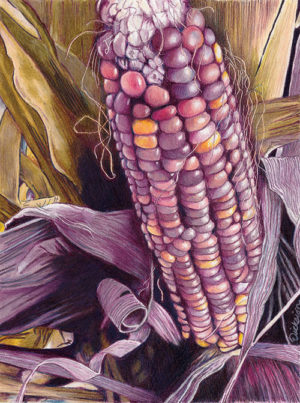 Fall Color by Rhonda Dicksion